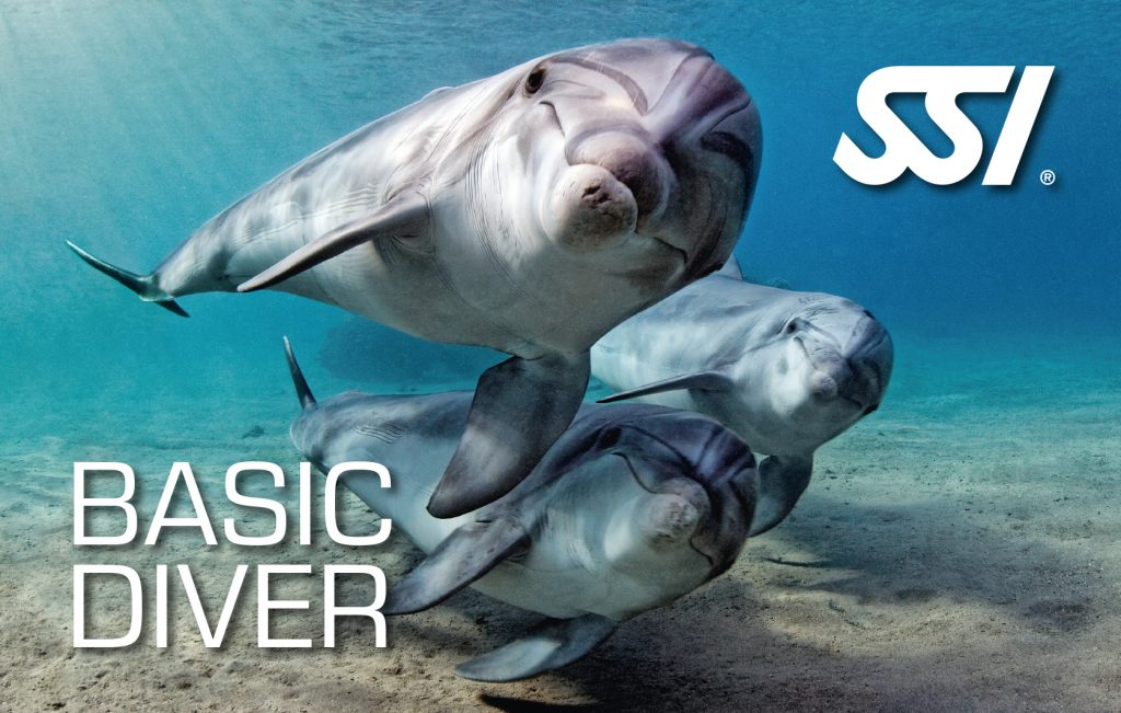 Try Scuba Diving and Basic Diver