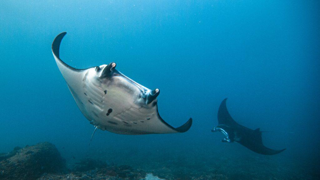 Go Fun Diving Nusa Penida