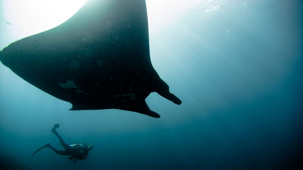 Open Water Diver Course Пробные погружения на Пениде